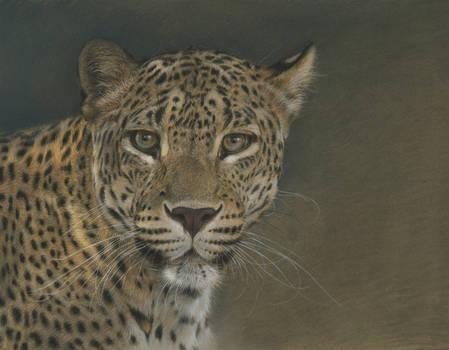 Panther : Pastel on Pastelmat paper