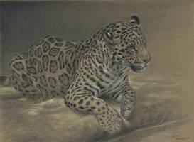 Jaguar : Charcoal and pastel on Stonehenge kraft by wimke