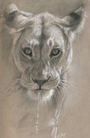 Lionnes by wimke