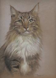 Cat by wimke