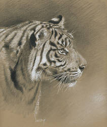 Tiger head study by wimke