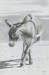 Sketchbook donkey