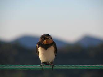 bird in cable_1 by Netmunta