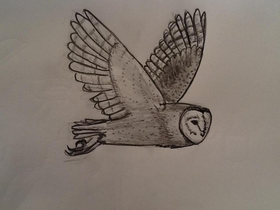 Flying owl pencil drawings - photo#21