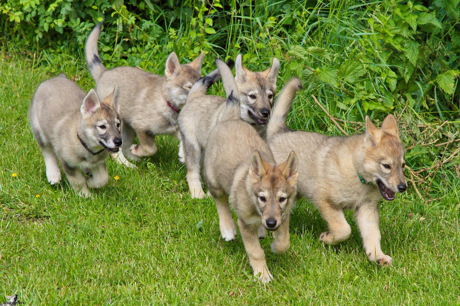 Wolf Park