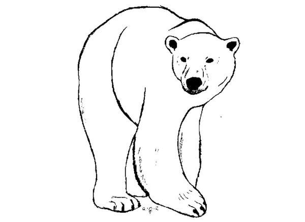 Line Art Bear : Polar bears drawing