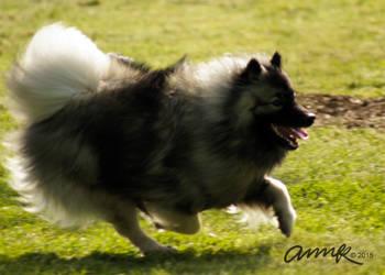 Run for Joy by Chezhnian