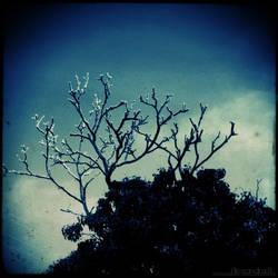The Deer Tree