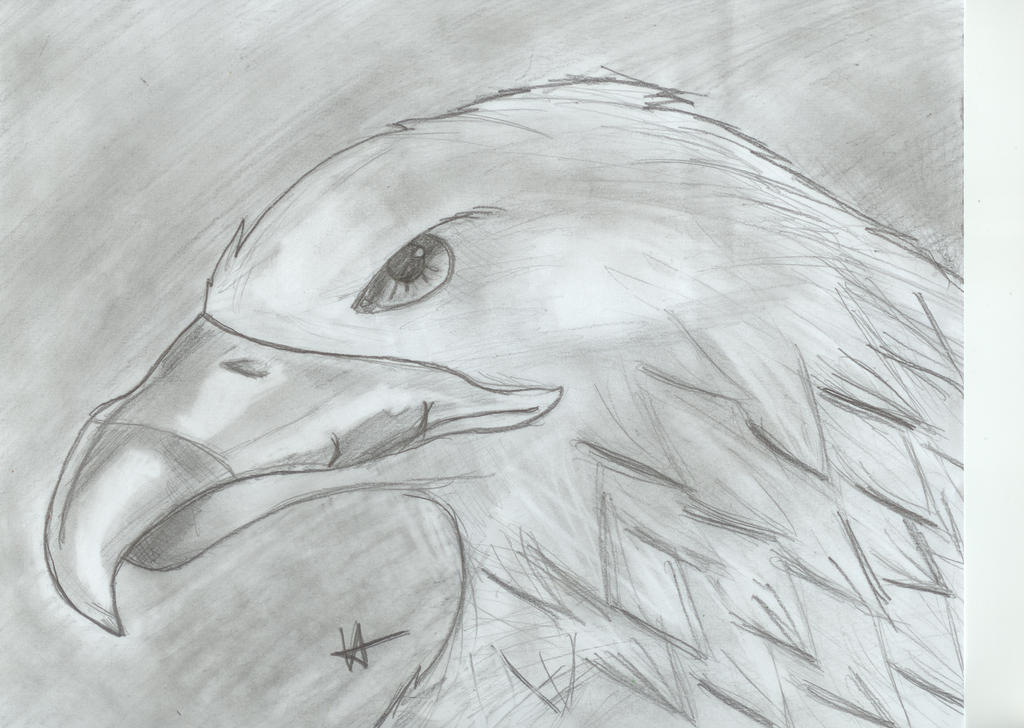 Week 4:Eagle by MissFrazzle
