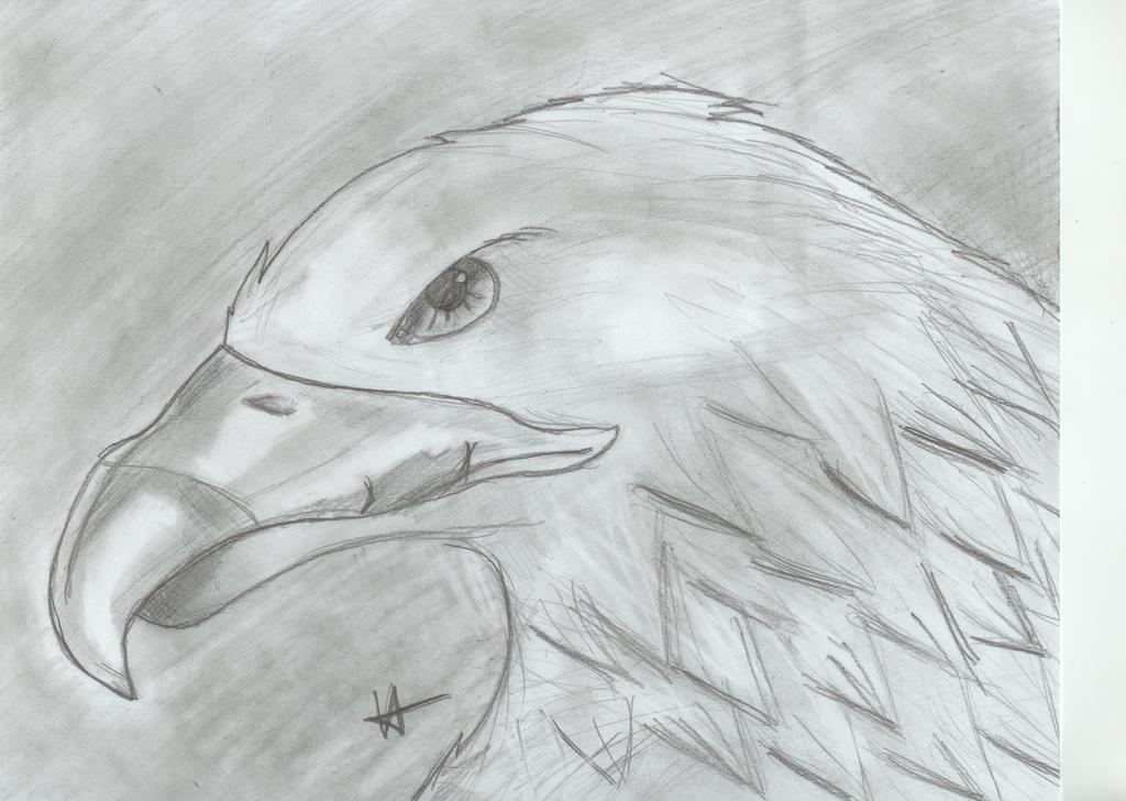Week 4:Eagle by MissFrazzle