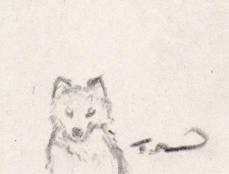 Little wolf drawing by Raidrar