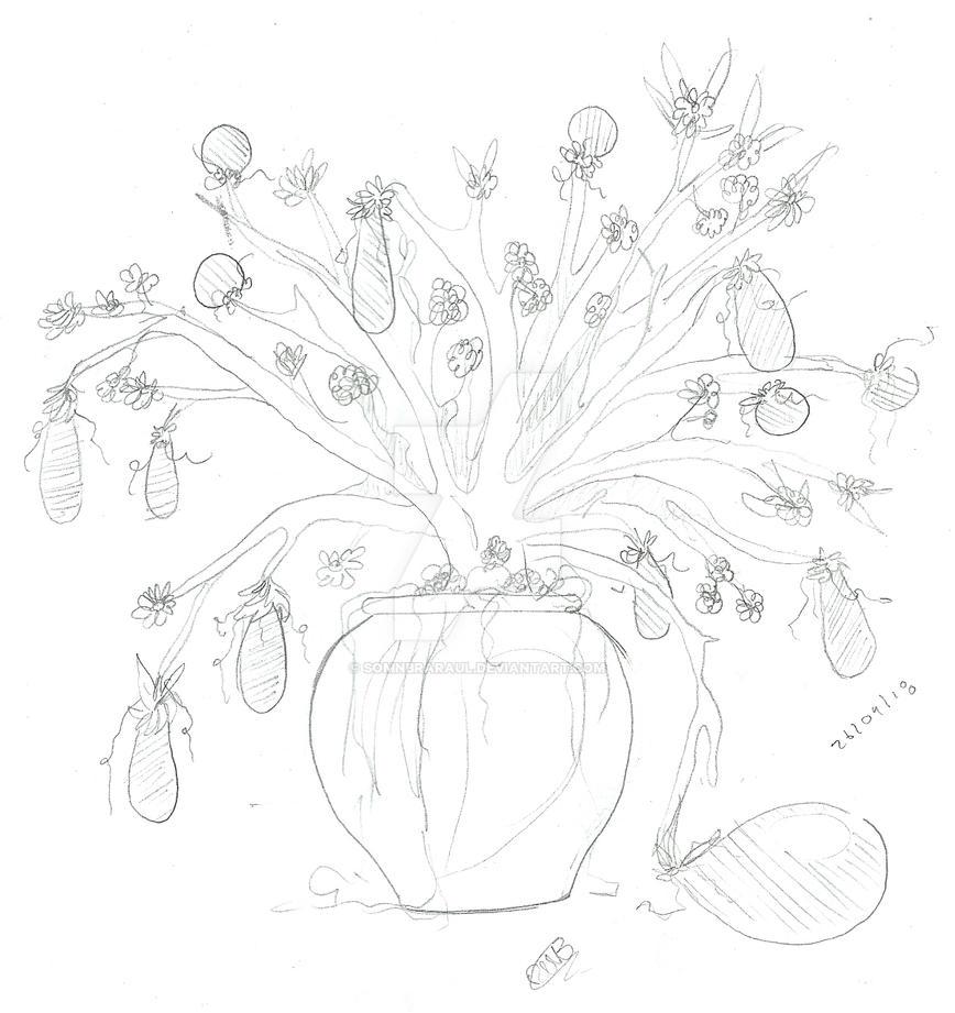 Planta de berenjenas by SomnbraRaul