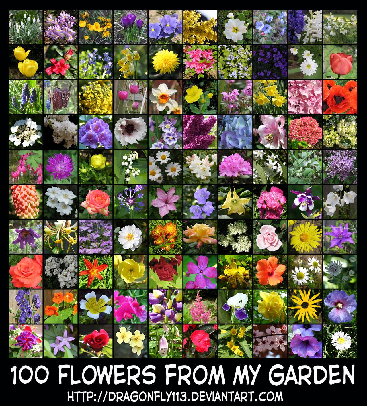 100 Flowers From My Garden by Brigitte Fredensborg on DeviantArt