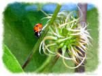 Photo Manip - Ladybug by Brigitte-Fredensborg