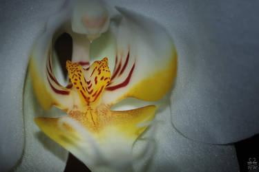 Orchidee by Brigitte-Fredensborg