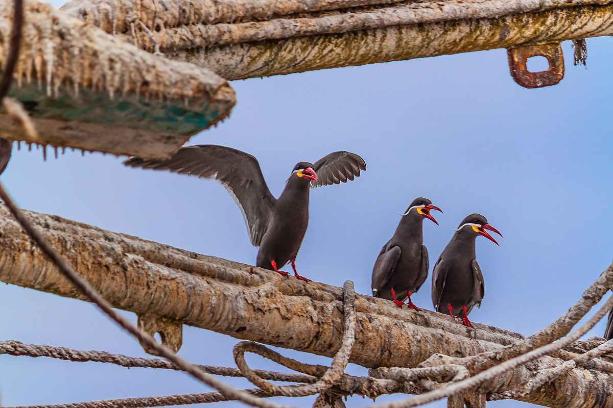 The 3 Terners, Pisco Peru by TarJakArt