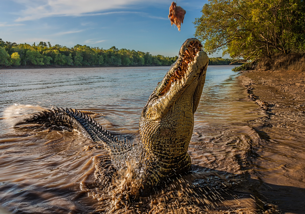 Estuarine Crocodile by TarJakArt