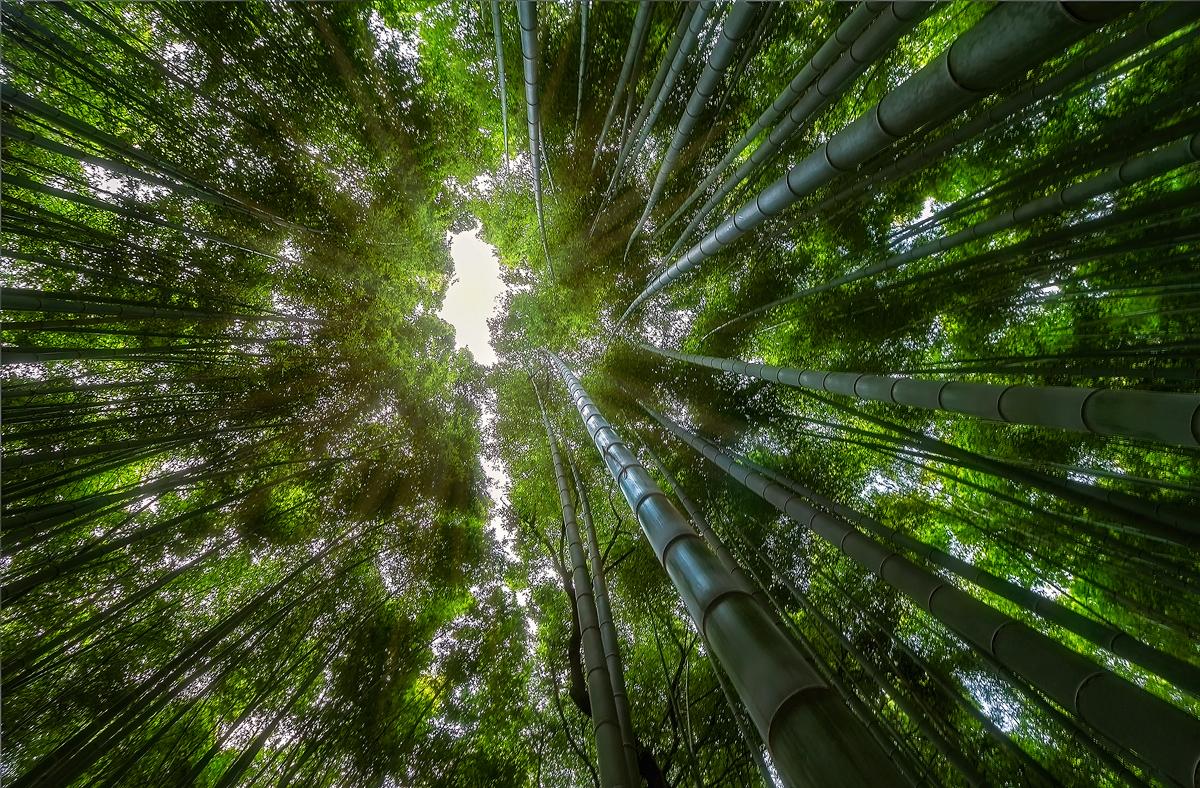 Arashiyama by TarJakArt
