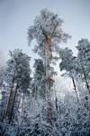 Cold Tsardom