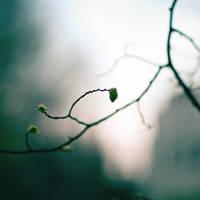 Spring Pattern by vlad-m