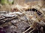 Root Texture