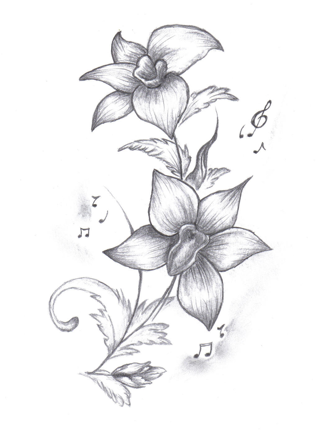 Orchid Flower Line Drawing : Gousicteco orchid drawing images