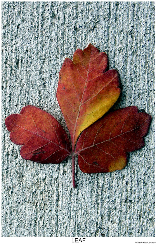 Leaf Me Alone by hunter1828
