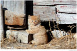 Orange Kitten Closer