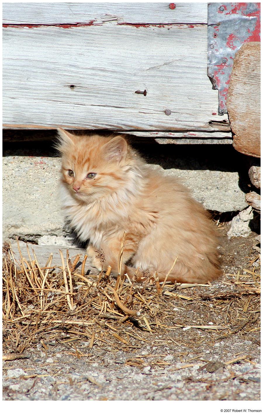Little Orange Kitten Again
