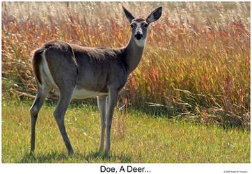Doe, A Deer... by hunter1828