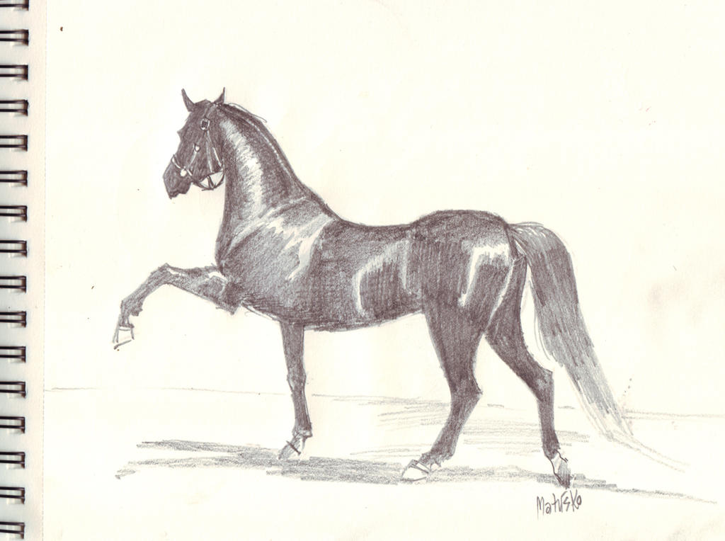 Konj - Horse by Sedeslav