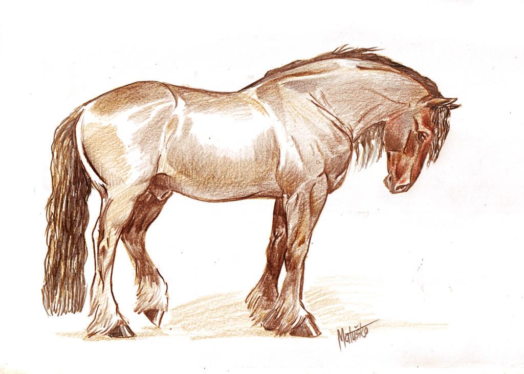 Stallion by Sedeslav