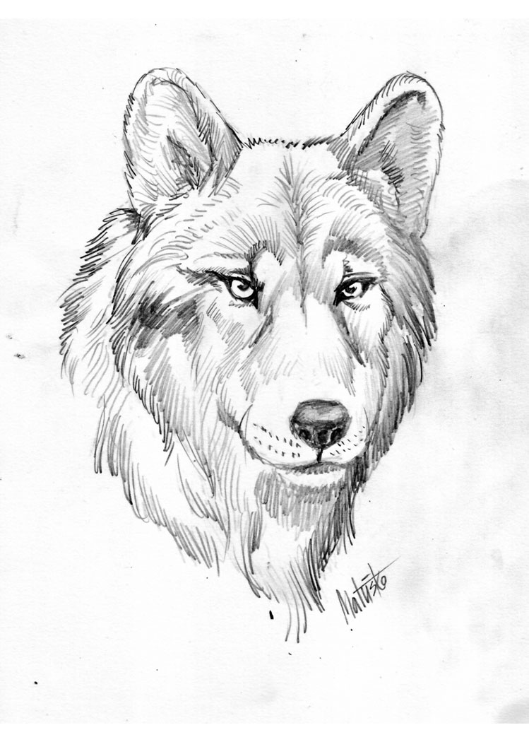 Wolf Vuk Vlk Lupo by Sedeslav