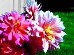 Enhanced Beauty by Sairendipity
