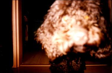 my dog-nin X3 by akamaru
