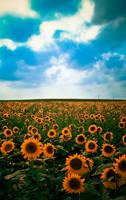 Sunflowers by falconmjc07