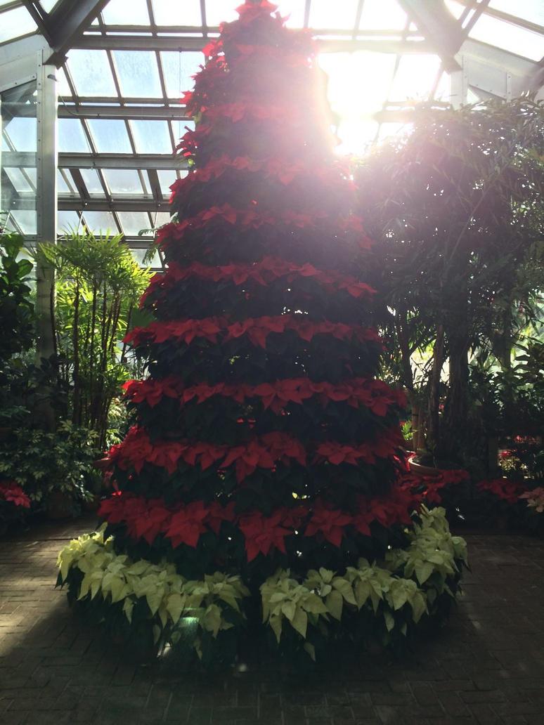 Poinsettia Tree Display by fieoria