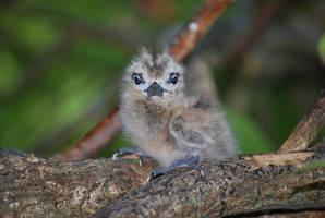 Fairytern chick by Oddersnude