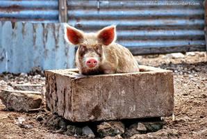 Piggie by Oddersnude
