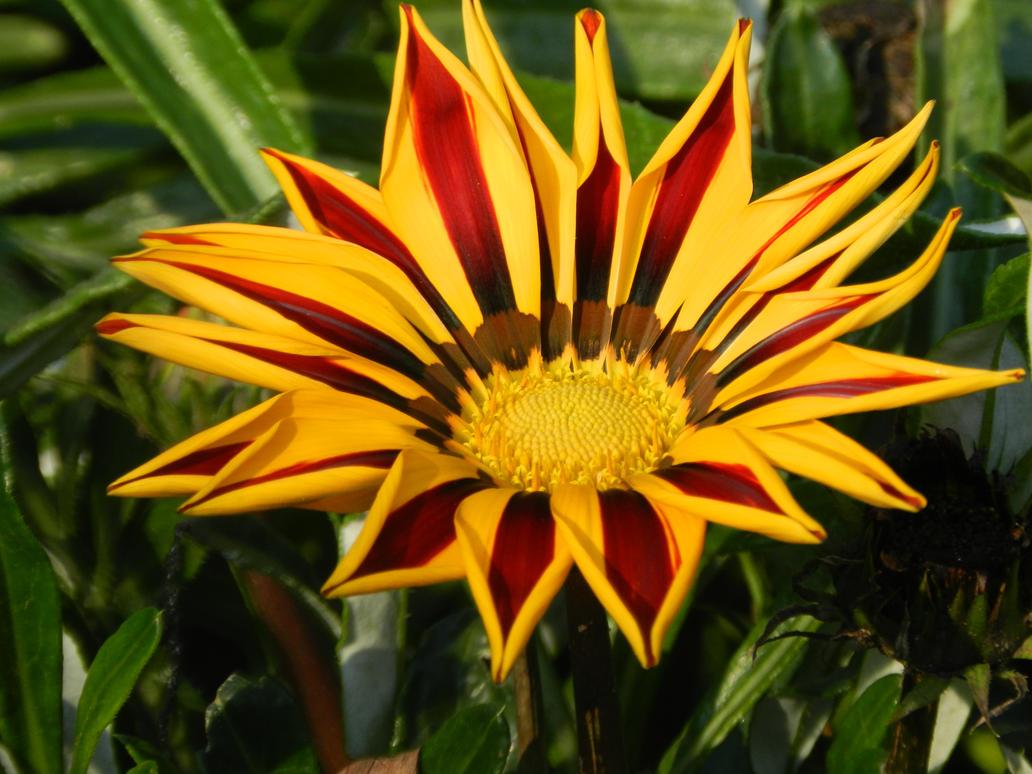 Just one flower 2 by MichelangelaRenton on DeviantArt