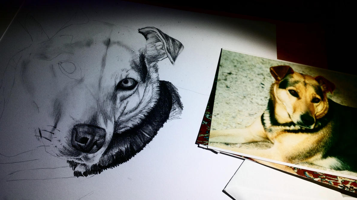 Desaturation of a dog - part 1 by Naboru