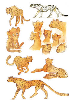 Cheetah sketches