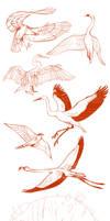 Birds by Drkav