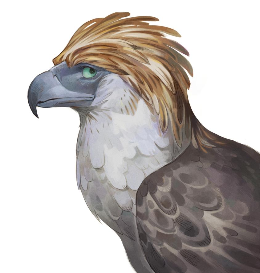 Philippine eagle by Drkav on DeviantArt