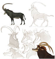 Sable antelope by Drkav