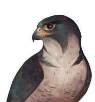 Falcon by Drkav