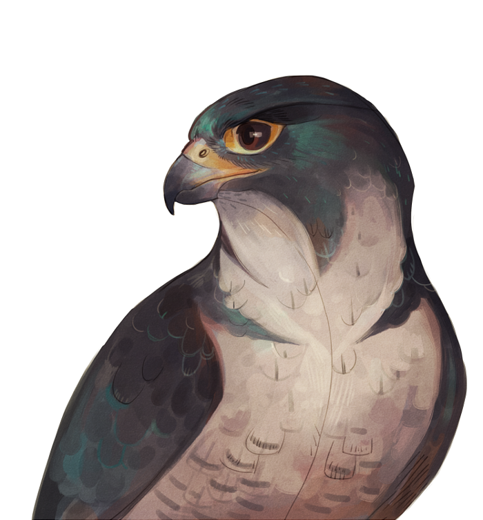 Falcon by Drkav