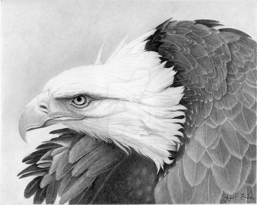 War Bird by AlpoArts