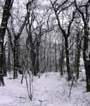 snowed upon