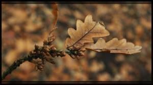 Autumn: Oak leaf by Faunish